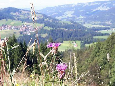 VCH Gästehaus Allgäu-Weite Bild 18