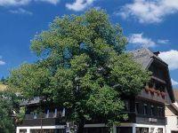Gasthof Adler, Tennenbronn